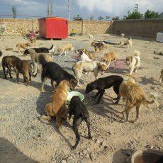 غذارسانی به سگ های تحت حمایت پناهگاه